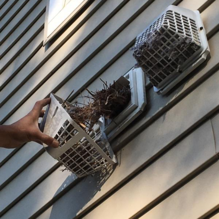 Dryer Vent Cleaning - Birds Nest